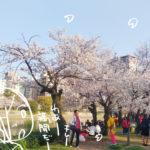 桜満開でした