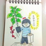 観葉植物の植え替え