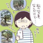 桜と栗林公園と母