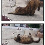 尾道で出会ったネコ