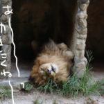 猛暑の中、安佐動物公園へ行ってみたら
